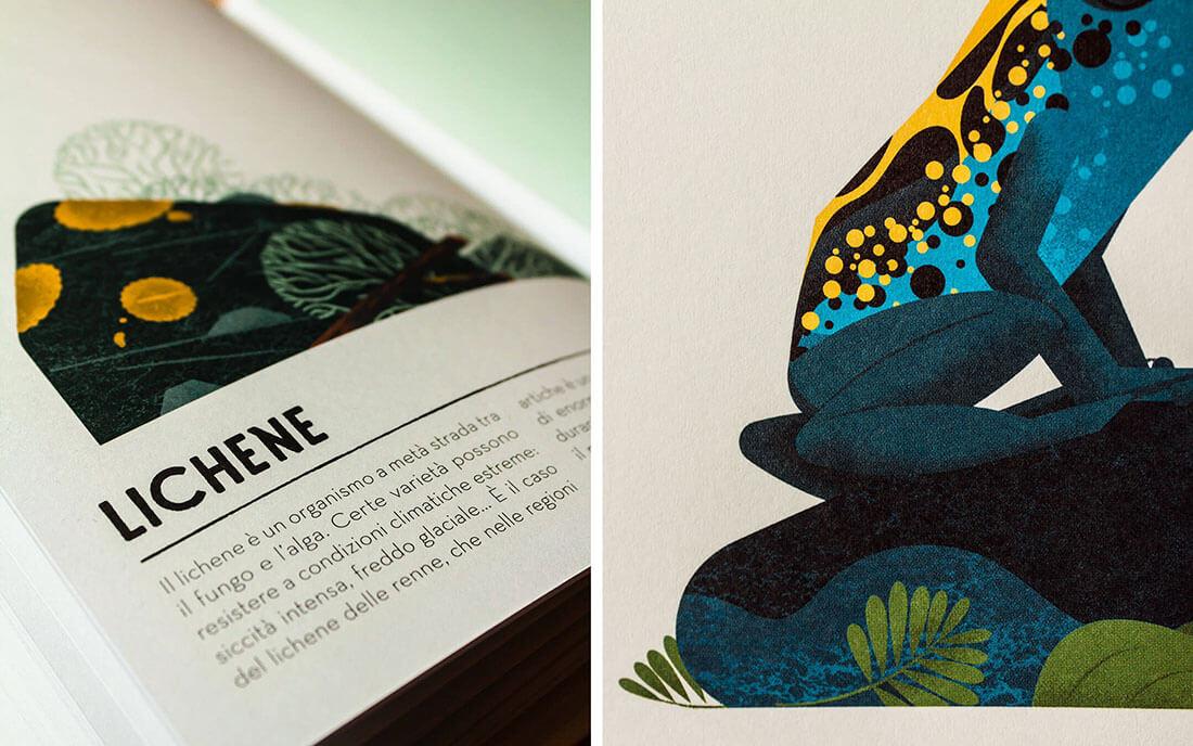 Colorama, libro sui colori. Dettaglio e illustrazione colore verde lichene e blu rana