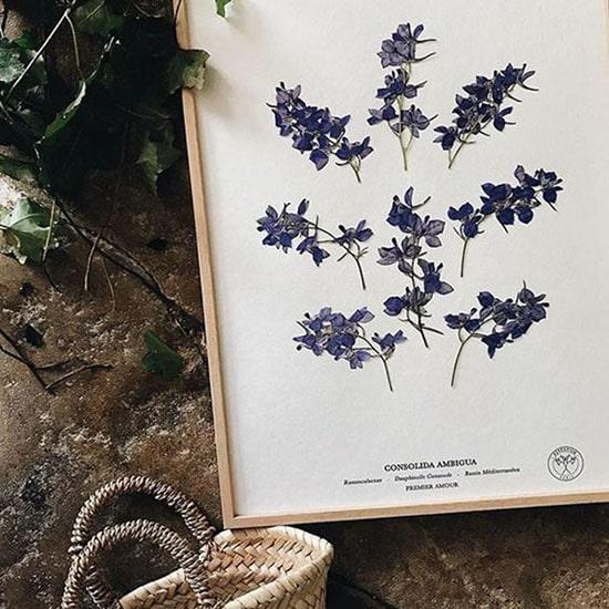 """Regali di Natale illustrati: quadro """"Dauphinelle consoude violette premier amour"""" di Herbarium. Dal blog di Marianna Milione"""